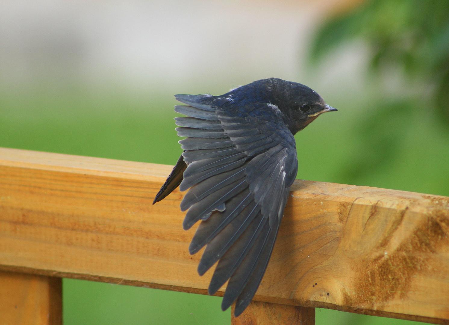 Soso - das ist also mein Flügel :-)