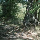 Sotto bosco