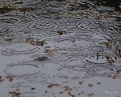 Sounds of Rain