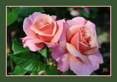 Sourire de roses