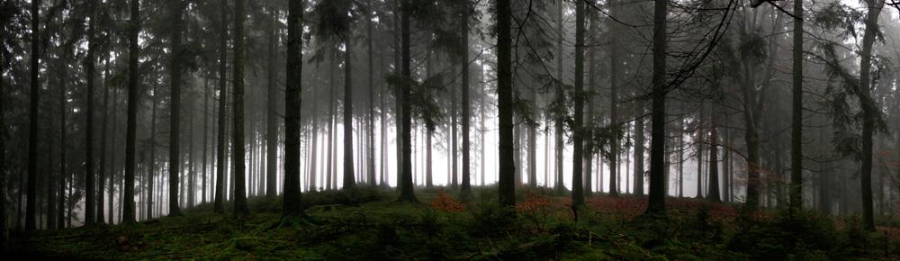 sous-bois brumeux