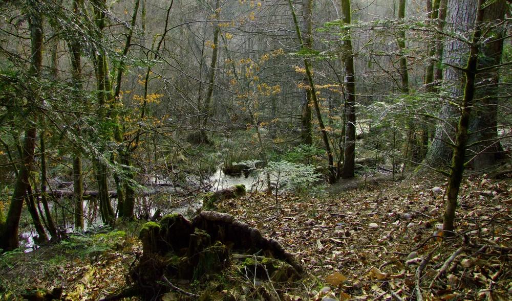 sous bois vallee de corbe