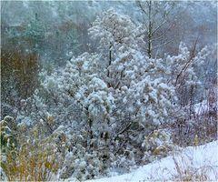 * sous la neige *