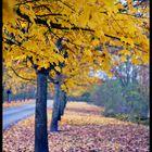 sous l'automne et les feuilles mortes