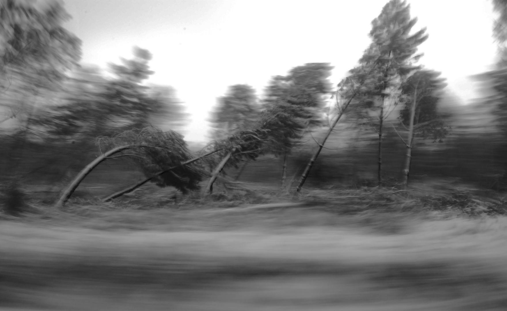 sous le vent.. photo et image | arbres, nature Images ...