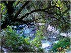 Sous les feuilles, la rivière...