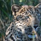 South Africa - Game Drive
