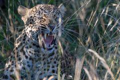South Africa - Game Drive Kruger National Park