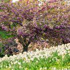 Souvenir d'un joli printemps