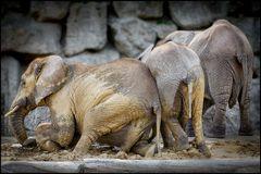 SPA für Elefanten -