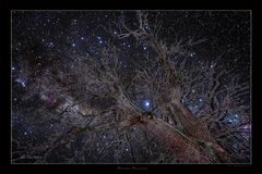Space-Tree