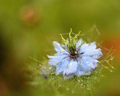 *späte Blüte*
