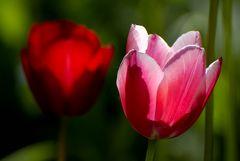 Später Blütenzauber