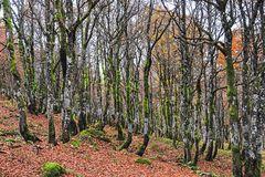 Später Oktober im Rainkopfwald