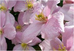 Spätes Mittwochsblümchen - mit Besuch