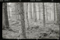 Spätherbst kurz vorm Schnee - mit Kodak T-Max 400