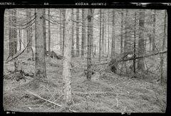 Spätherbst kurz vorm Schnee - mit Kodak T-Max 400 II