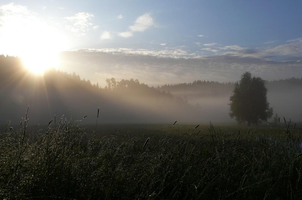 Späthfrühlingsmorgen....