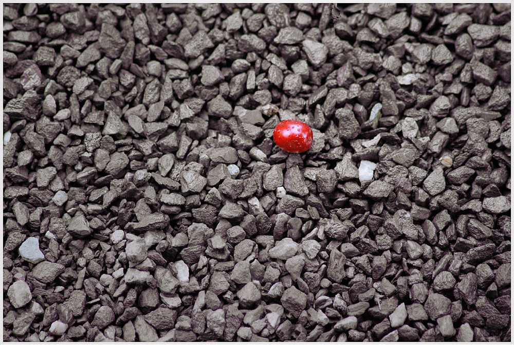 Spätsommer (1) oder: A ruby in a mountain of rocks