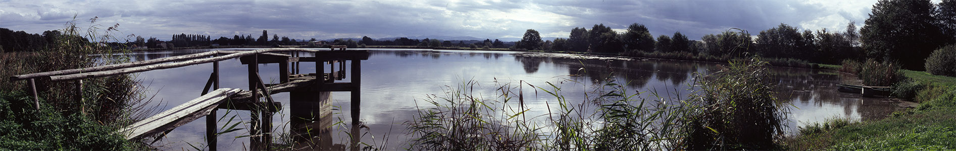Spätsommer am Teich
