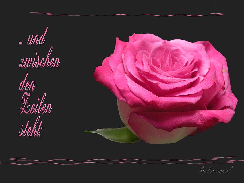 """""""SpätSommer- Rose""""... und zwischen den Zeilen steht ..."""