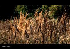 Spätsommer Wistinghauser Moor