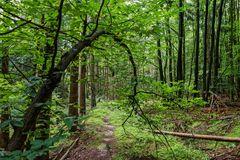 Spätsommerimpressionen auf dem Waldpfad