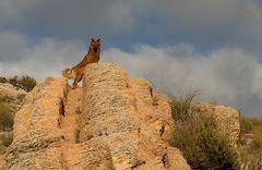 Spanische Landschaft :-)