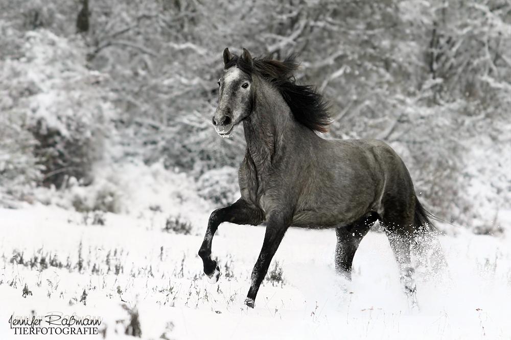 Spanischer Schneespaß *