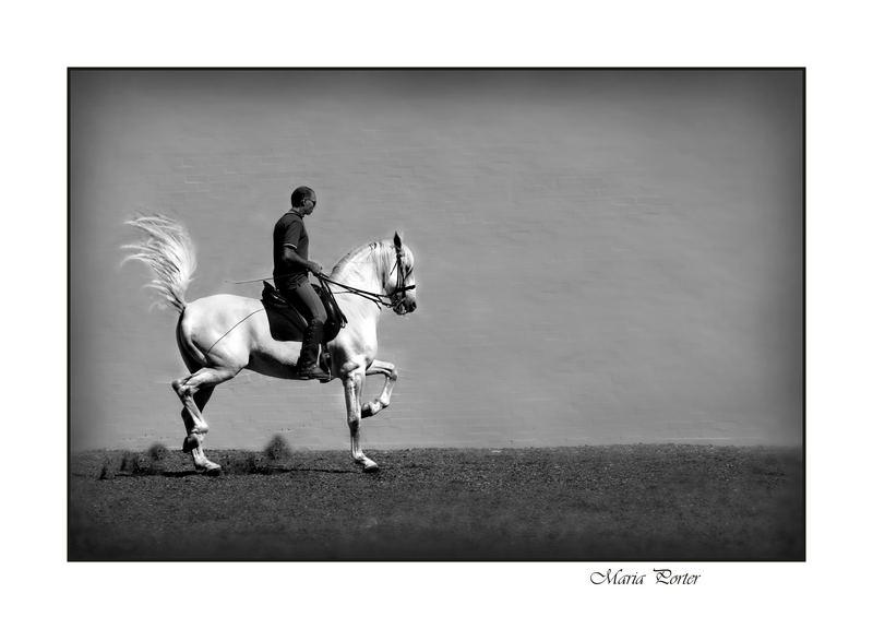 Spanish horse 2