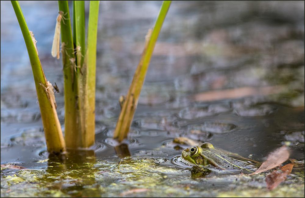 Spannendes im Teich..
