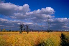Spargel im Herbst, -7