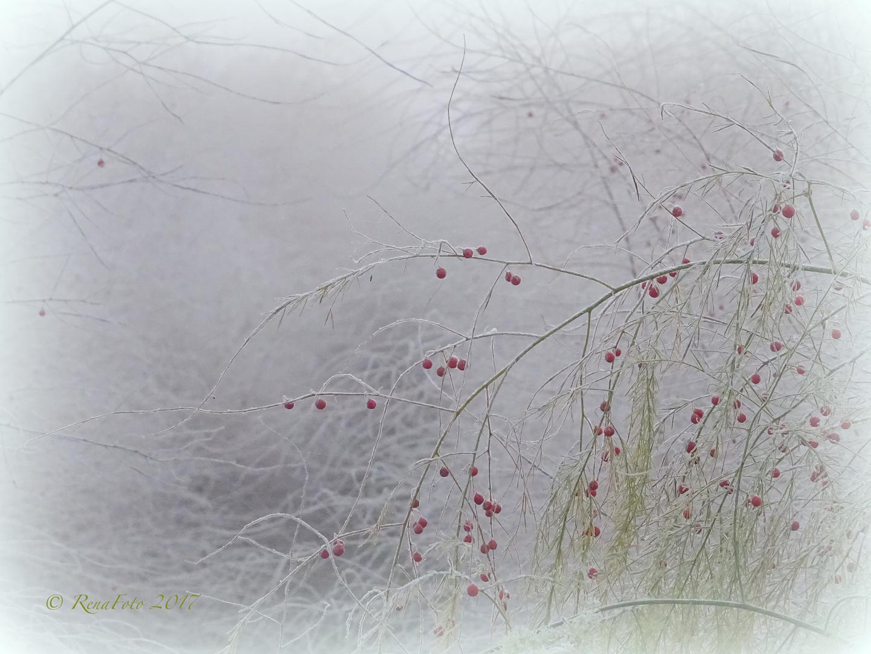 Spargelfeld im Nebel beim ersten Frost