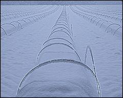 Spargelfeld im Winter