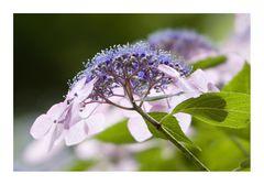 Sparkle Flower