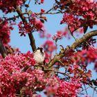Sparrow smells the spring :-)
