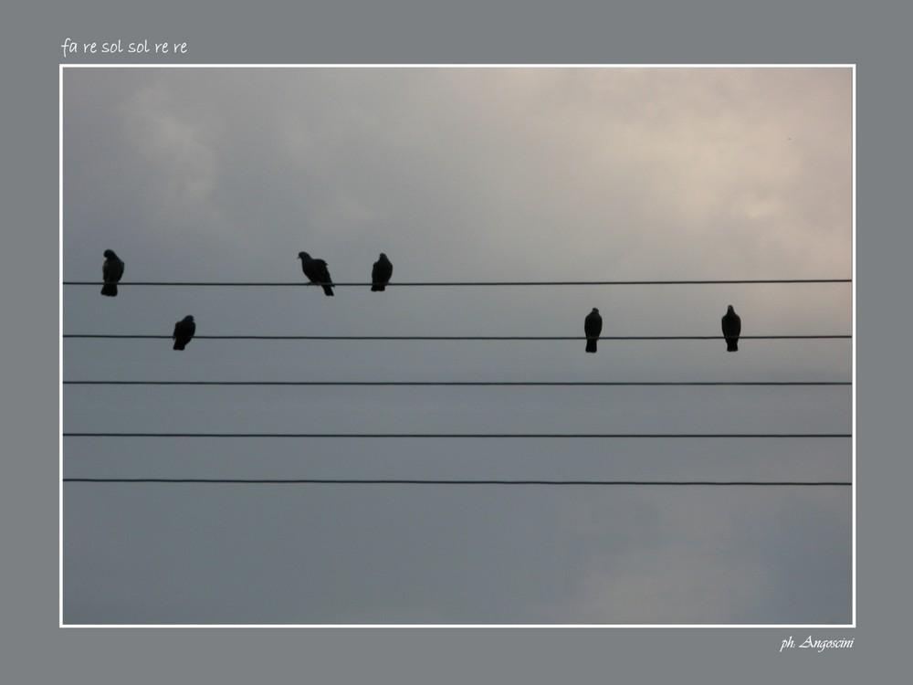 spartito musicale in piccionaia