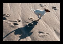Spass am Strand...