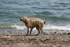 Spaß am Strand von Alanya, Türkei #1
