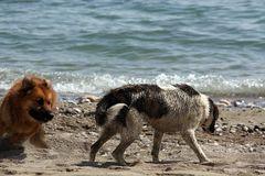 Spaß am Strand von Alanya, Türkei #2