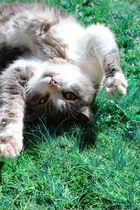 Spaß im Gras