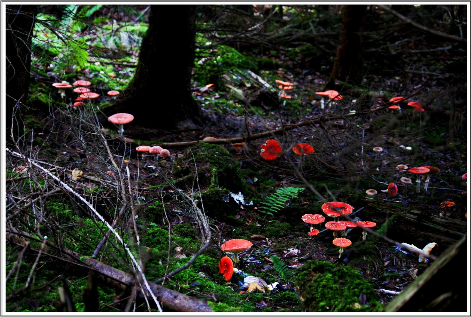 spazieren im Märchenwald