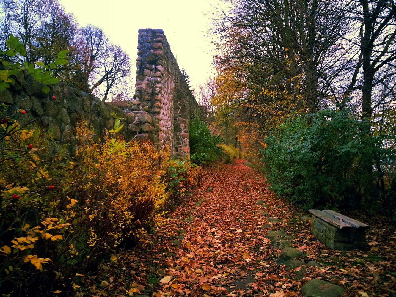 Spaziergang allein im November an der Müritz