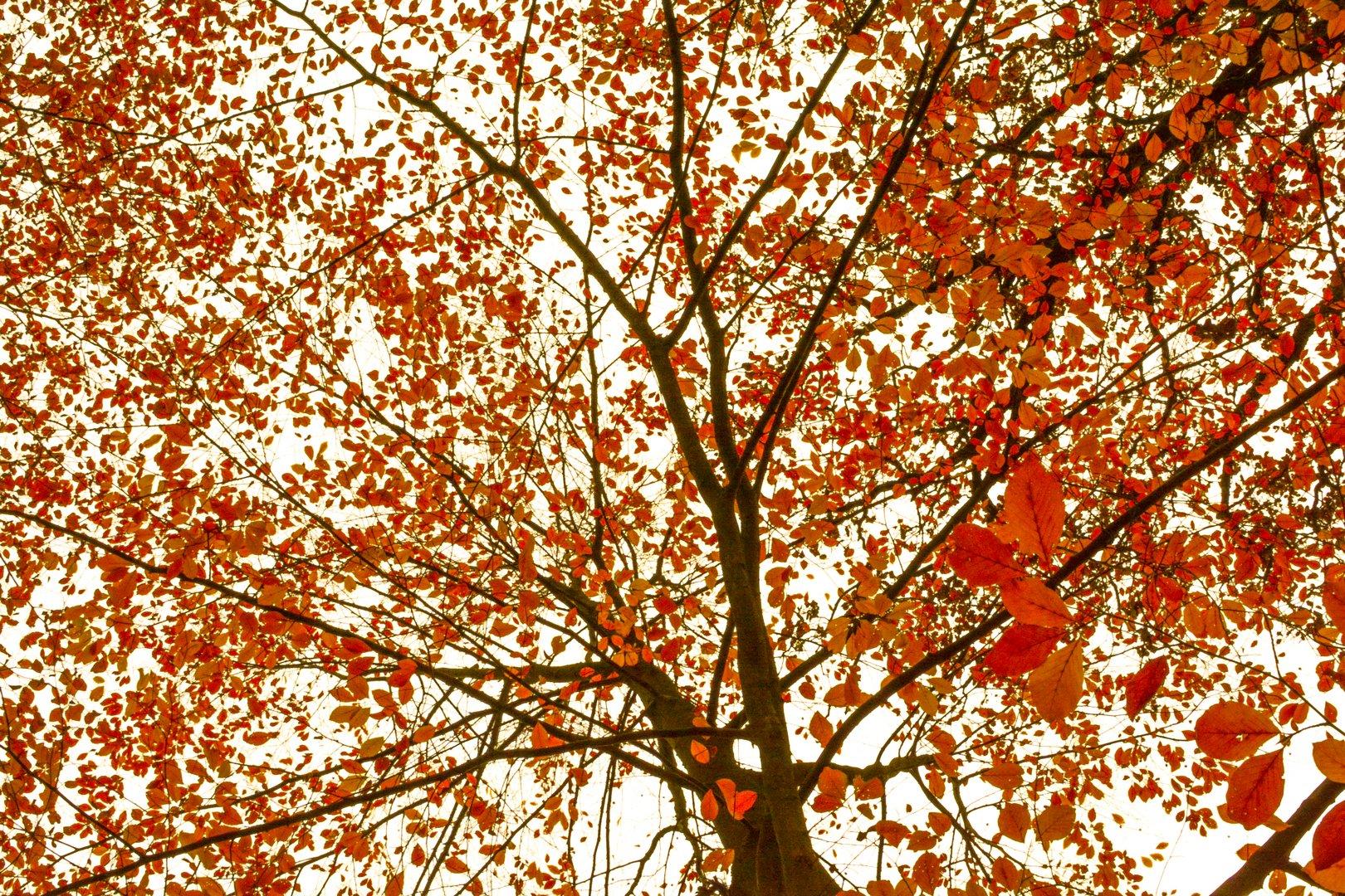 Spaziergang durch den barocken Herbstwald