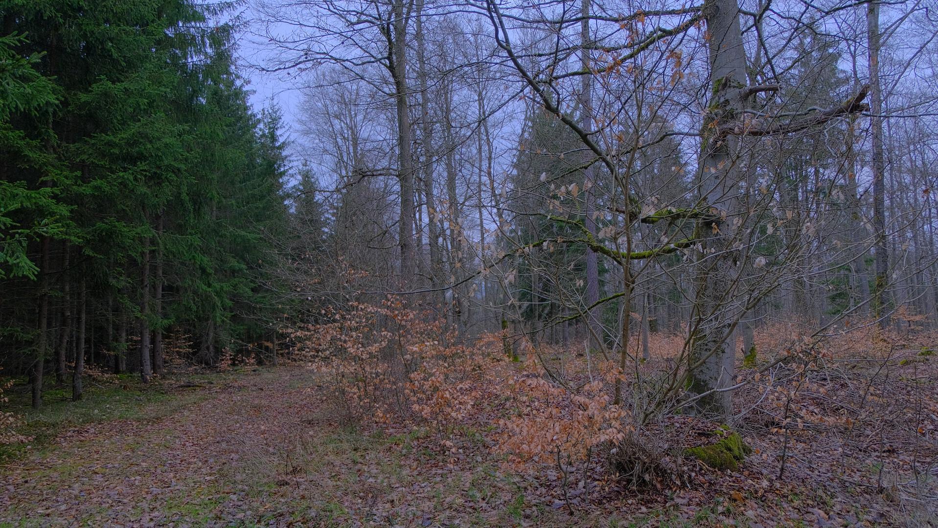 Spaziergang durch den Wald, 2 (paseando por el bosque, 2)
