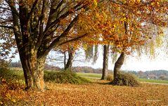 Spaziergang durch`s raschelnde Herbstlaub