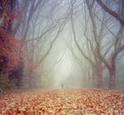 Spaziergang im Novembernebel