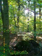 Spaziergang im Wald...