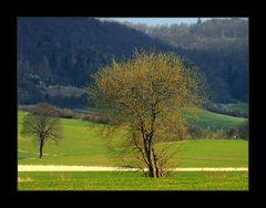 Spaziergang in den Frühling...