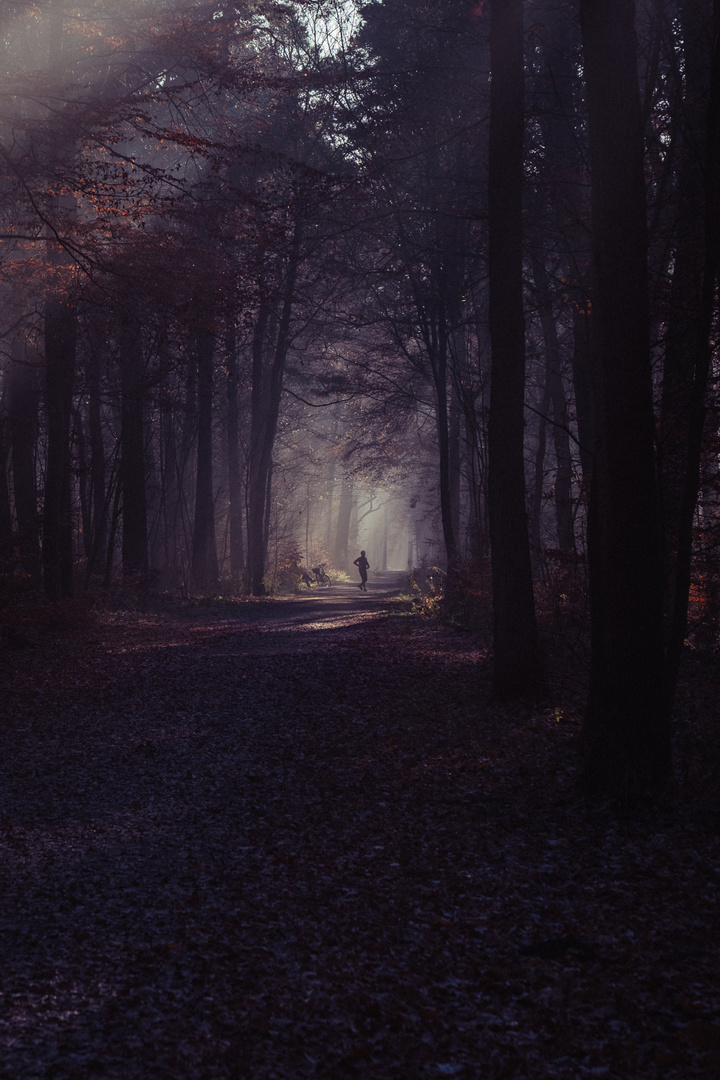 Spaziergang in der Eilenriede